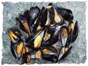 Shell Black Mussel